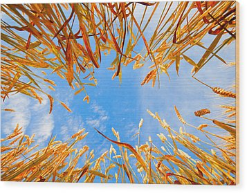 In The Wheat Wood Print by Alexey Stiop