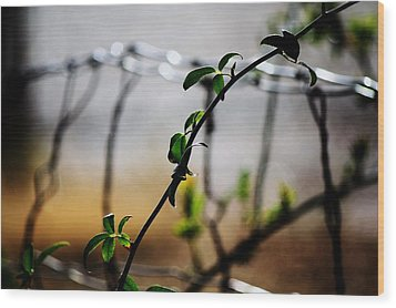 Wood Print featuring the photograph In The Wire  by Jessica Shelton