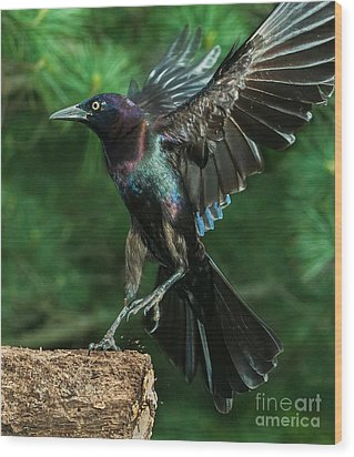 Incoming Grackle Wood Print