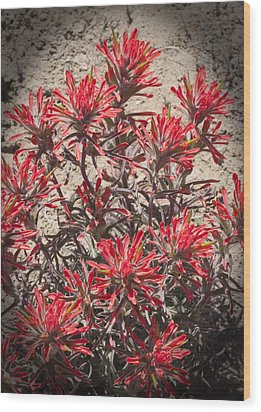 Wood Print featuring the photograph Indian Paint Brush by Daniel Hebard