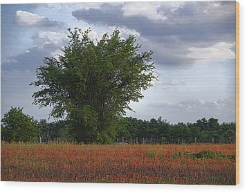 Indian Paint Brush Revisited Wood Print by Linda Phelps