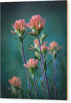 Indian Paintbrush At Dawn Wood Print by James Barber