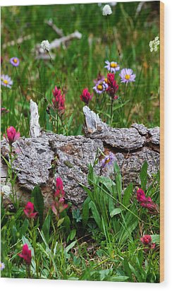 Wood Print featuring the photograph Indian Paintbrush by Ronda Kimbrow