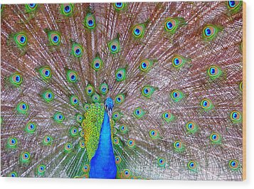 Indian Peacock Wood Print by Deena Stoddard