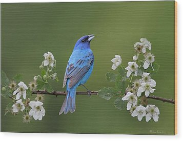 Indigo Bunting On Berry Blossoms Wood Print