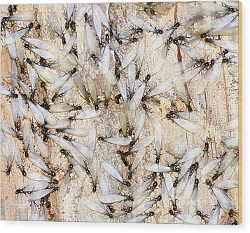 Infested Wood Print by Pam Garcia
