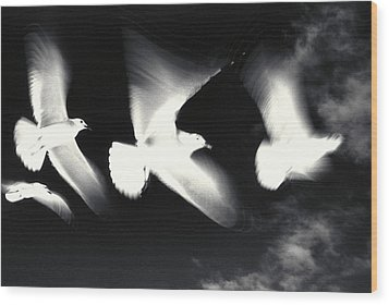 Infrared Gulls Wood Print by Jerry McElroy
