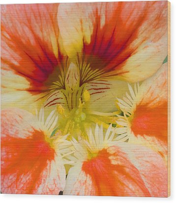Wood Print featuring the photograph Ink Blot by Heidi Smith