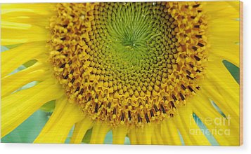 Inner Peace Forms Within This Sweet Yellow Sunflower Wood Print by Eunice Miller