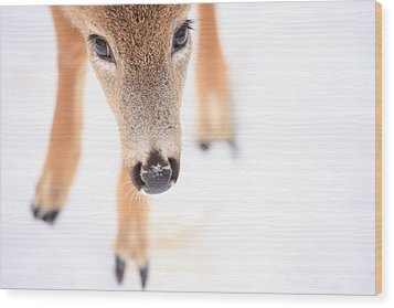 Innocent Eyes Wood Print
