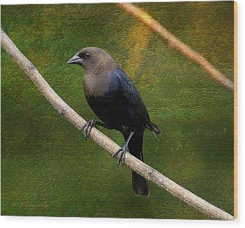 Inquisitive Cowbird Wood Print by J Larry Walker