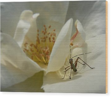 Insect On A Soft Rose Wood Print by MM Anderson