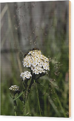 Wood Print featuring the photograph Insect On White Flower by Leif Sohlman