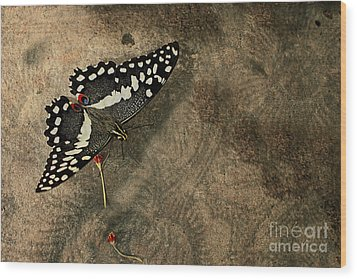 Insect Study Number 30 Wood Print by Floyd Menezes