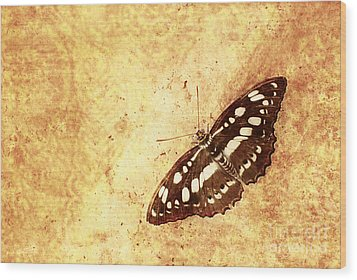 Insect Study Number 66 Wood Print by Floyd Menezes