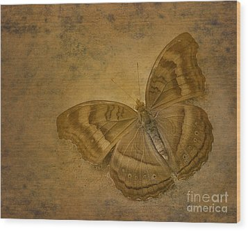 Insect Study Number 94 Wood Print by Floyd Menezes