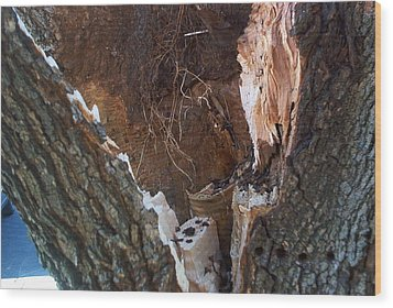 Wood Print featuring the photograph Inside A Bradford Pear Tree by Emmy Marie Vickers