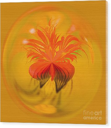Inside Out Nasturtium Wood Print by Anne Gilbert