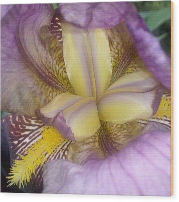 Inside The Iris Wood Print