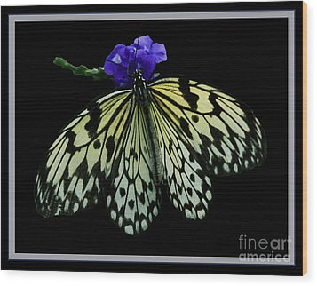 Inspired By Butterflies  Wood Print by Inspired Nature Photography Fine Art Photography