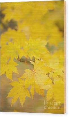 Intensely Yellow Wood Print by Anne Gilbert