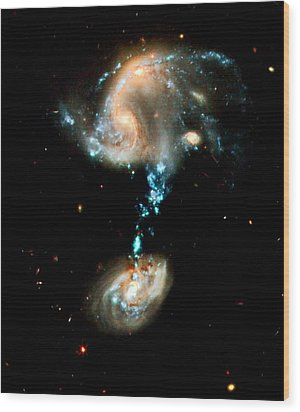 Interacting Galaxies Group Arp 194 Wood Print by Amanda Struz