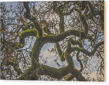 Intertwined Wood Print by Mitch Shindelbower