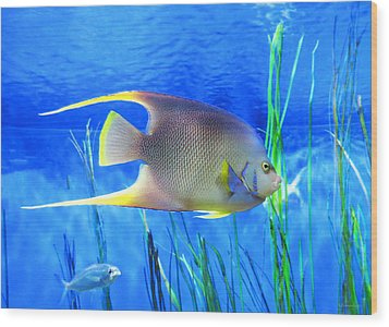 Into Blue - Tropical Fish By Sharon Cummings Wood Print by Sharon Cummings