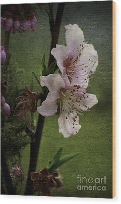 Wood Print featuring the photograph Into Spring by Lori Mellen-Pagliaro