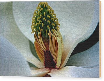 Into The Heart Of The Magnolia Drybrush Wood Print