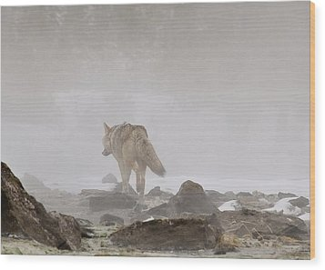 Wood Print featuring the photograph Into The Mist by Yeates Photography