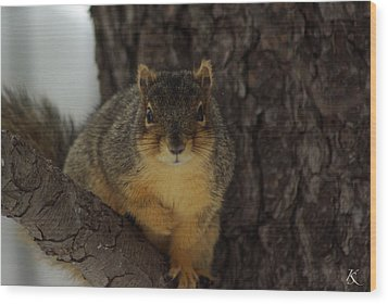 Intrigued Squirrel  Wood Print