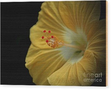 Invitation To Beauty Hibiscus Flower  Wood Print by Inspired Nature Photography Fine Art Photography