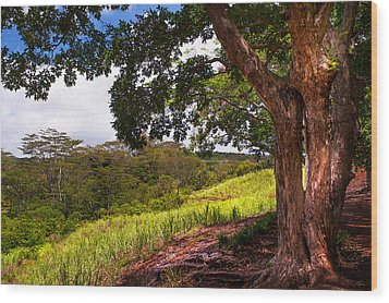 Invitation To Shadow Place. Chamarel. Mauritius Wood Print by Jenny Rainbow