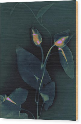 Ipomena Wood Print by Susan Leake