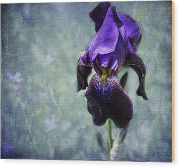 Iris - Purple And Blue - Flowers Wood Print