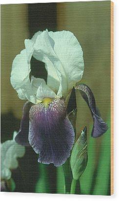 Iris 3 Wood Print
