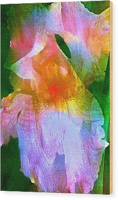Iris 53 Wood Print by Pamela Cooper