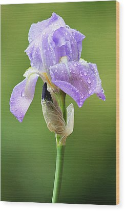 Wood Print featuring the photograph Iris After The Rain by Trina  Ansel