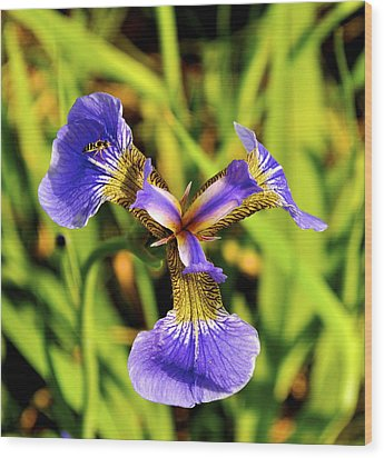 Wood Print featuring the photograph Iris by Cathy Mahnke