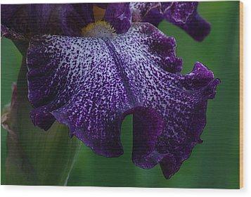 Wood Print featuring the photograph Iris Closeup by Ken Dietz