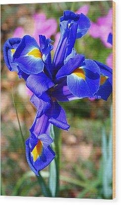 Iris Wood Print by Denise Moore