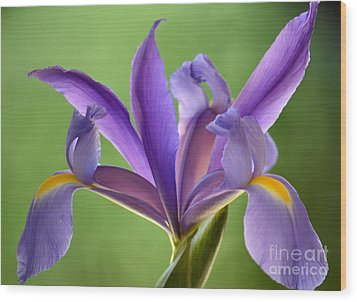 Iris Elegance Wood Print by Deb Halloran