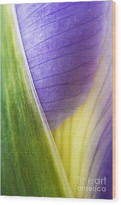 Iris Flower Close Up Wood Print by Natalie Kinnear