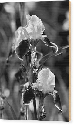 Iris In Black And White Wood Print by Karon Melillo DeVega