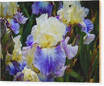 Wood Print featuring the photograph Iris In Blue And Yellow by Patricia Babbitt
