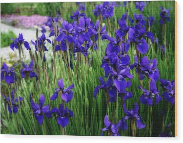 Wood Print featuring the photograph Iris In The Field by Kay Novy