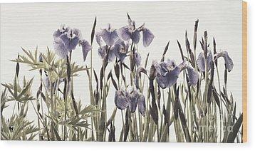 Iris In The Park Wood Print by Priska Wettstein