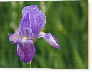 Wood Print featuring the photograph Iris by Lana Trussell