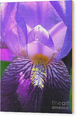 Wood Print featuring the photograph Iris Light by Susan  Dimitrakopoulos